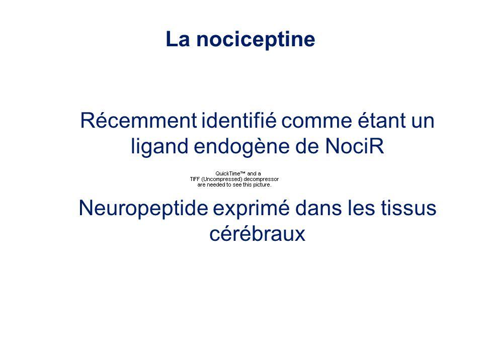 Récemment identifié comme étant un ligand endogène de NociR Neuropeptide exprimé dans les tissus cérébraux La nociceptine