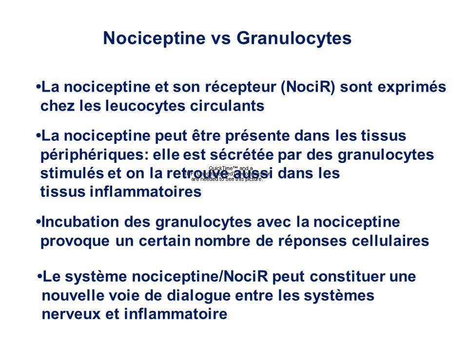La nociceptine et son récepteur (NociR) sont exprimés chez les leucocytes circulants La nociceptine peut être présente dans les tissus périphériques: