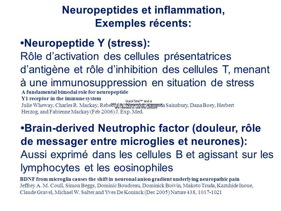 Neuropeptides et inflammation, Exemples récents: Neuropeptide Y (stress): Rôle dactivation des cellules présentatrices dantigène et rôle dinhibition d