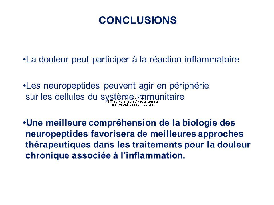 CONCLUSIONS La douleur peut participer à la réaction inflammatoire Les neuropeptides peuvent agir en périphérie sur les cellules du système immunitair