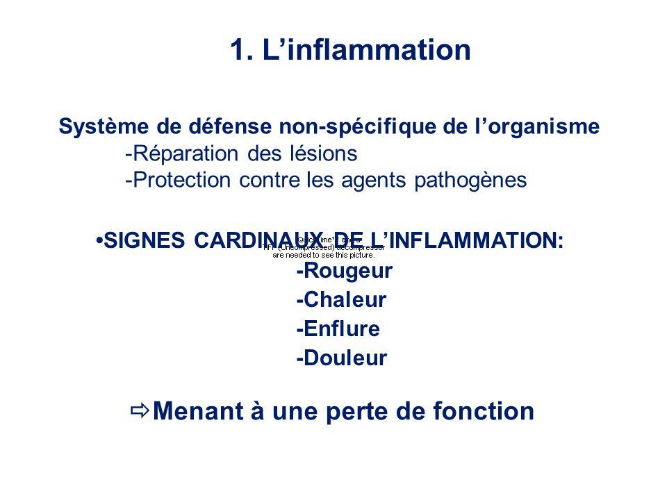 1. Linflammation Menant à une perte de fonction SIGNES CARDINAUX DE LINFLAMMATION: -Rougeur -Chaleur -Enflure -Douleur Système de défense non-spécifiq
