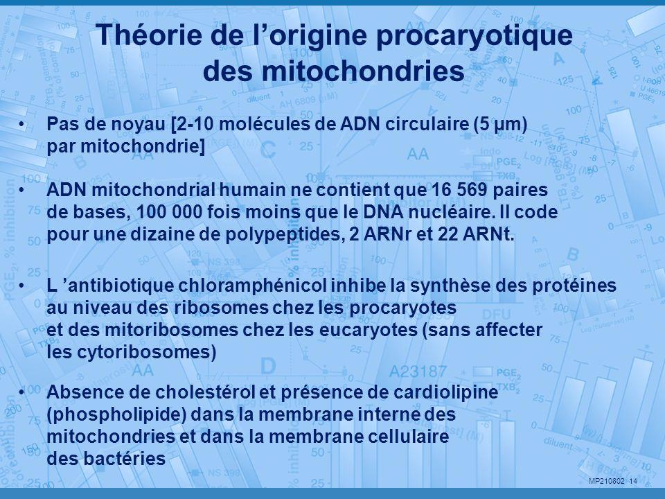 MP210802 14 ADN mitochondrial humain ne contient que 16 569 paires de bases, 100 000 fois moins que le DNA nucléaire. Il code pour une dizaine de poly
