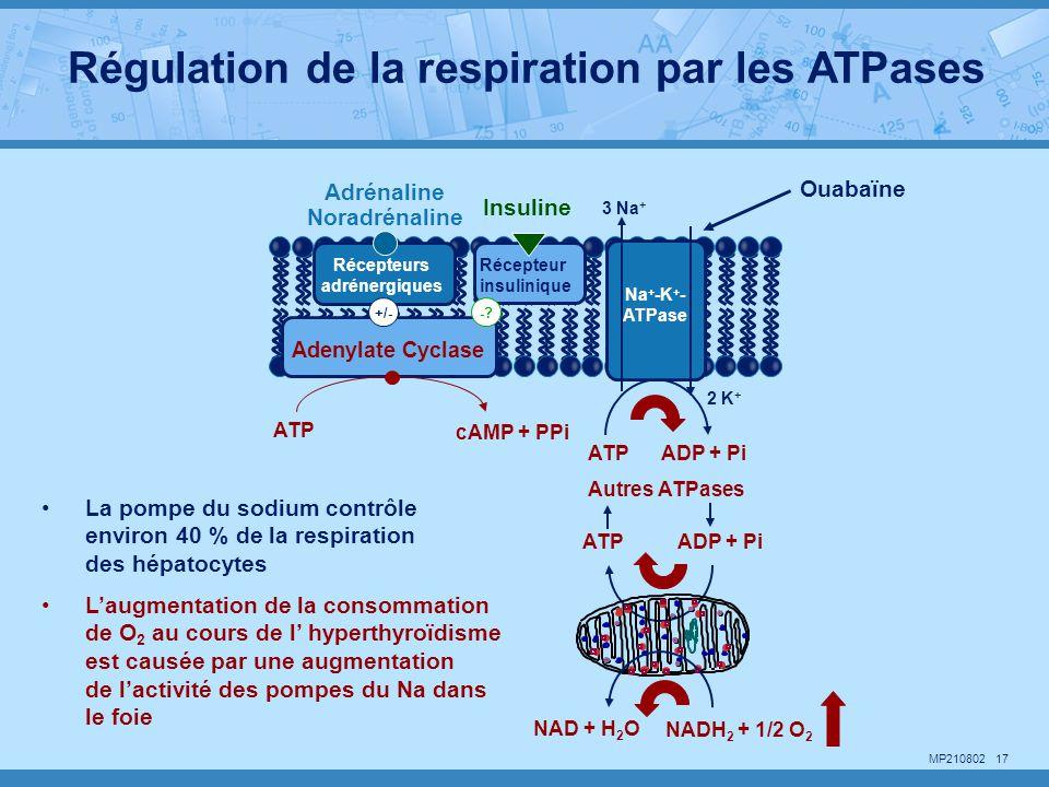 MP210802 17 NADH 2 + 1/2 O 2 NAD + H 2 O ATPADP + Pi 2 K + Ouabaïne cAMP + PPi ATP ADP + Pi Autres ATPases La pompe du sodium contrôle environ 40 % de