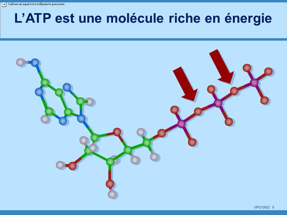 MP210802 16 O + 2e --> O = O = + 2H + --> H 2 O b NADH 2 NAD ADP + Pi ATP a a3a3 c c1c1 220 mV 2e 2H + NADH2 + 1/2 O2 + ADP + Pi --> NAD + H2O + ATP Force motrice protonique (220 mV) = pot.
