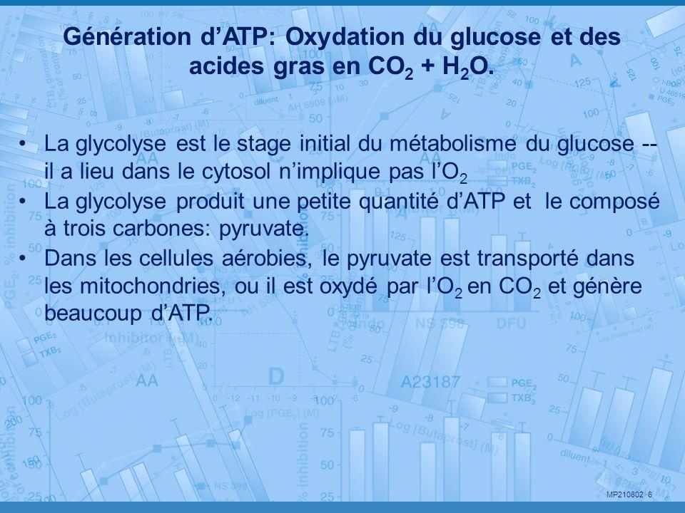 MP210802 7 4 façons de faire de faire de lATP Phosphorylation oxydative (Mitochondries) Glycolyse (cytosol) Photosynthèse (chloroplastes) Cycle de Krebs (Mitochondries - GTP) Synthèse des macromolécules Pompage ionique (pompe du Na) Mobilité (amibes, spermato) Contraction (muscles) Production de chaleur (frissonnement) Endocytose, exocytose Plusieurs façons de consommer de lATP ATP ADP + Pi Le cycle de lATP