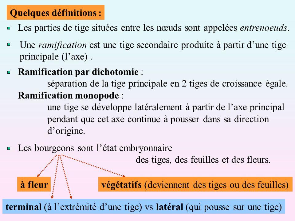 13 Quelques définitions : Les parties de tige situées entre les nœuds sont appelées entrenoeuds.
