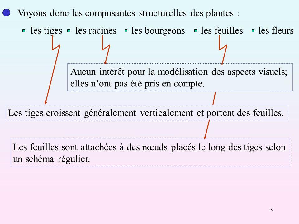 9 Voyons donc les composantes structurelles des plantes : les tigesles racinesles bourgeonsles feuillesles fleurs Aucun intérêt pour la modélisation des aspects visuels; elles nont pas été pris en compte.