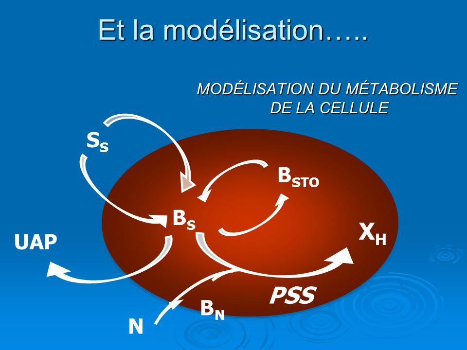 MODÉLISATION DU MÉTABOLISME DE LA CELLULE S BSBS XHXH PSS B STO UAP N BNBN Et la modélisation…..