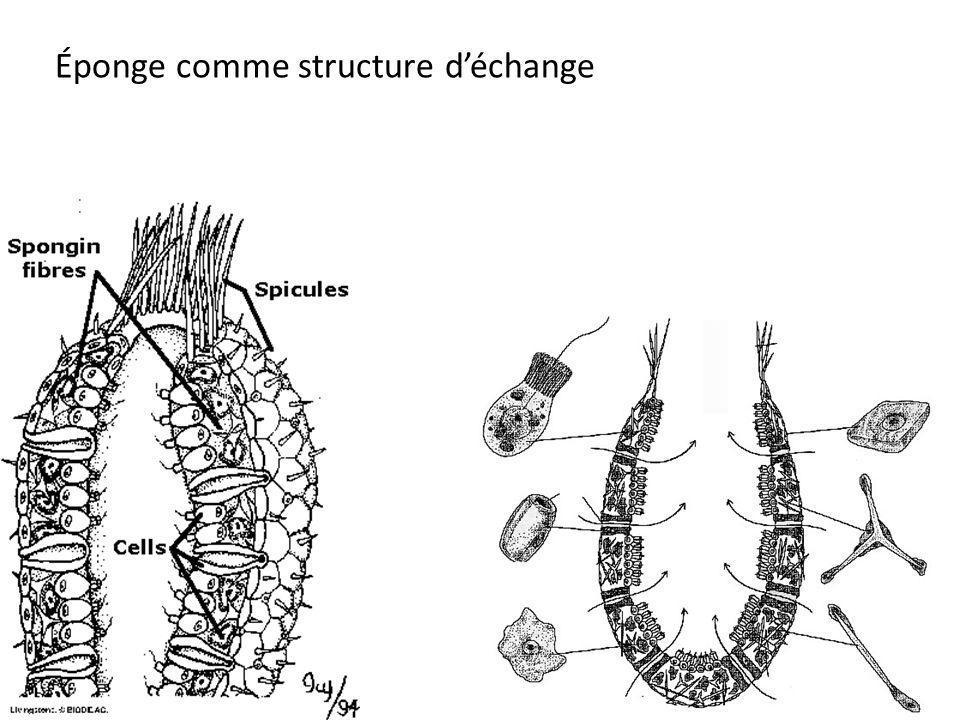Éponge comme structure déchange