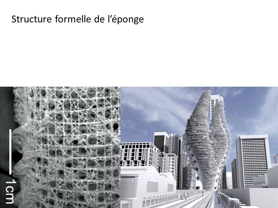 Structure formelle de léponge