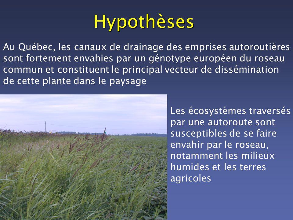 Hypothèses Au Québec, les canaux de drainage des emprises autoroutières sont fortement envahies par un génotype européen du roseau commun et constitue