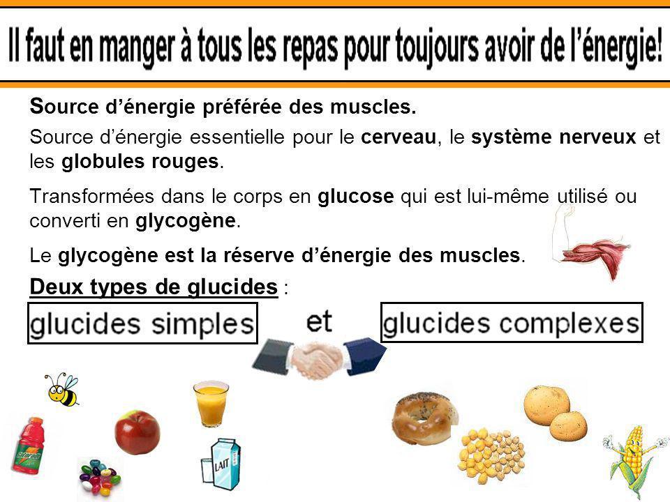 3.1 Les glucides S ource dénergie préférée des muscles. Source dénergie essentielle pour le cerveau, le système nerveux et les globules rouges. Transf