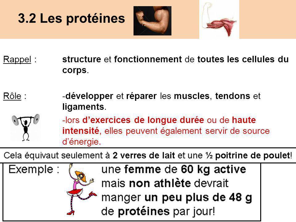 3.2 Les protéines Rappel : structure et fonctionnement de toutes les cellules du corps. Rôle : -développer et réparer les muscles, tendons et ligament
