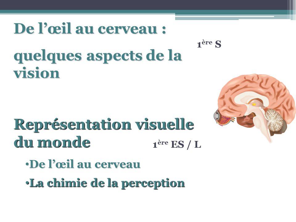 1 ère S 1 ère ES / L Représentation visuelle du monde La chimie de la perception La chimie de la perception De lœil au cerveau De lœil au cerveau De l