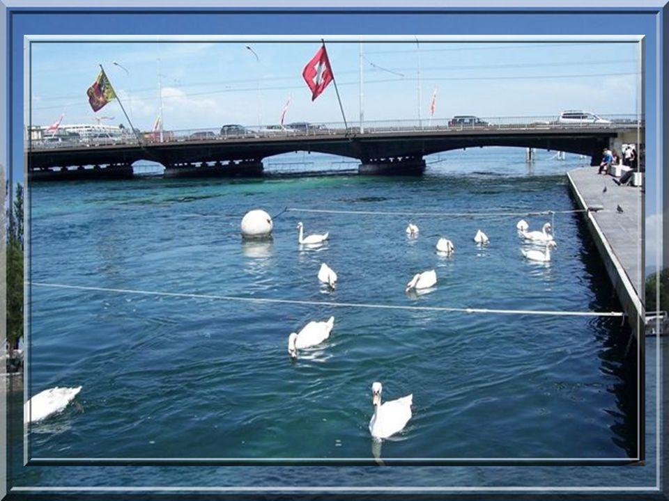 Ballade au bord du lac Léman. Ballade au bord du lac Léman