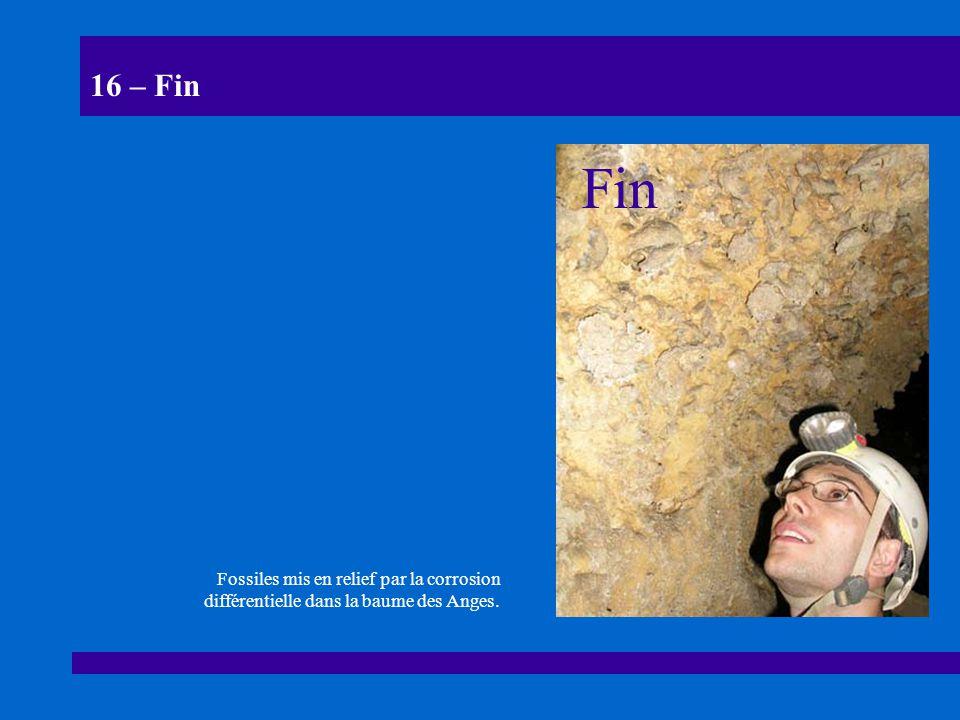 16 – Fin Fossiles mis en relief par la corrosion différentielle dans la baume des Anges. Fin