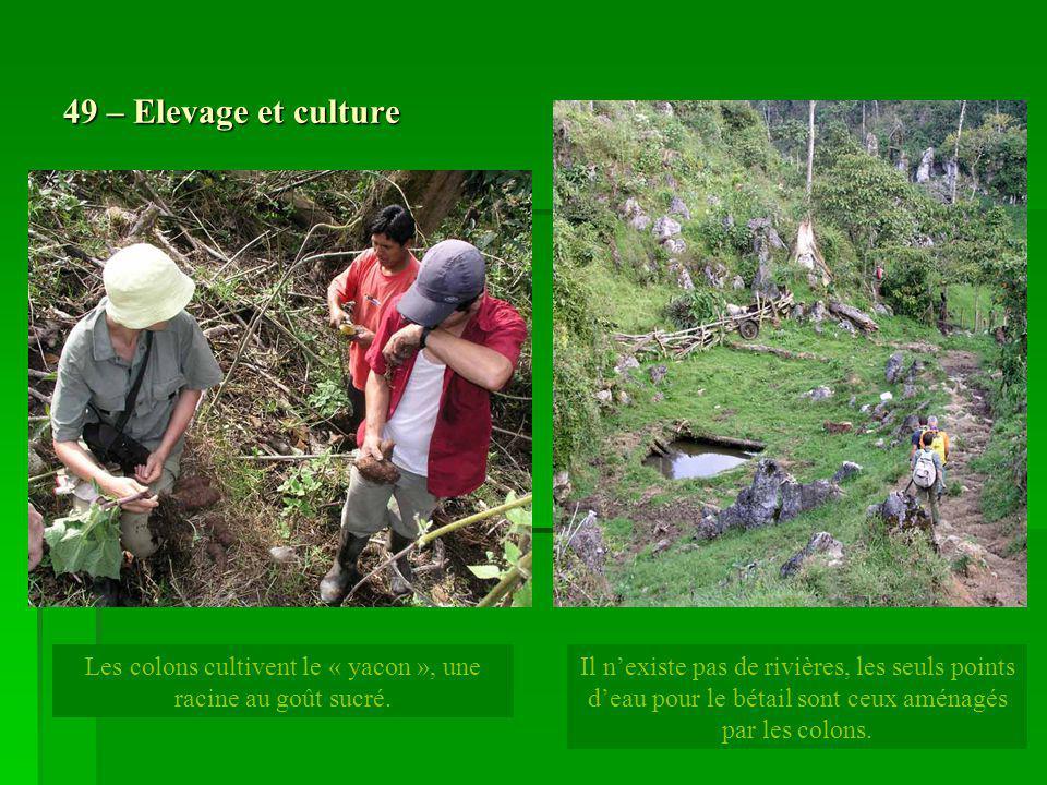 49 – Elevage et culture Les colons cultivent le « yacon », une racine au goût sucré. Il nexiste pas de rivières, les seuls points deau pour le bétail