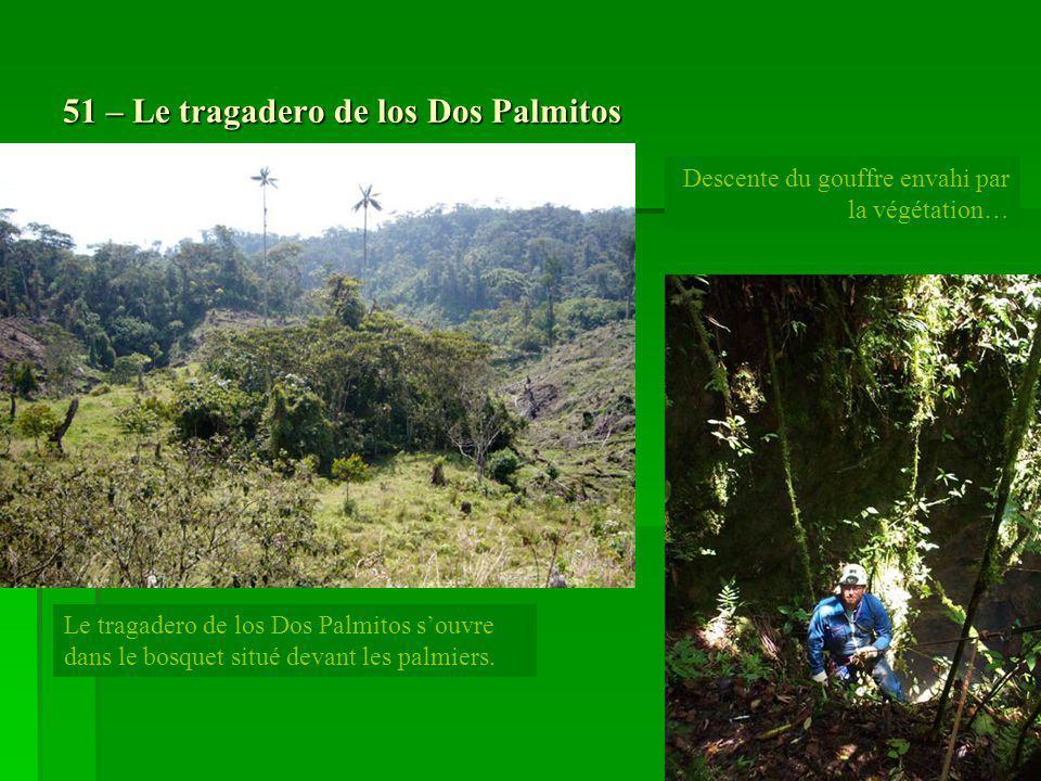 51 – Le tragadero de los Dos Palmitos Le tragadero de los Dos Palmitos souvre dans le bosquet situé devant les palmiers. Descente du gouffre envahi pa