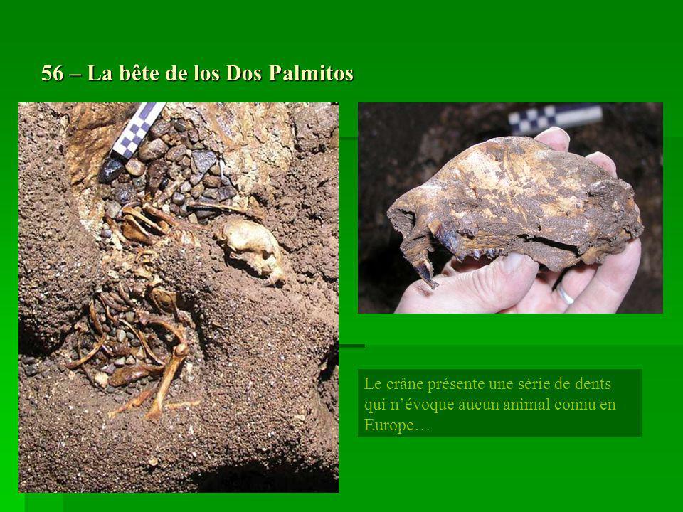 56 – La bête de los Dos Palmitos Le crâne présente une série de dents qui névoque aucun animal connu en Europe…