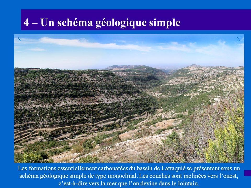 4 – Un schéma géologique simple Les formations essentiellement carbonatées du bassin de Lattaquié se présentent sous un schéma géologique simple de ty