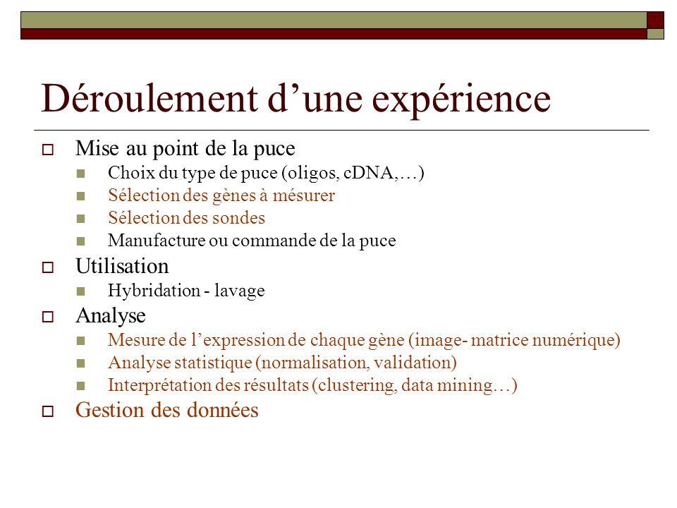 Déroulement dune expérience Mise au point de la puce Choix du type de puce (oligos, cDNA,…) Sélection des gènes à mésurer Sélection des sondes Manufac