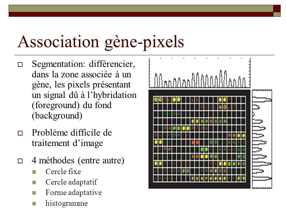 Association gène-pixels Segmentation: différencier, dans la zone associée à un gène, les pixels présentant un signal dû à lhybridation (foreground) du