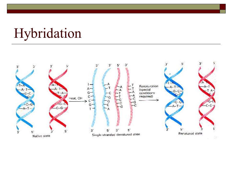 Mise au point dune puce Choix des gènes à mesurer Choix des sondes 1.