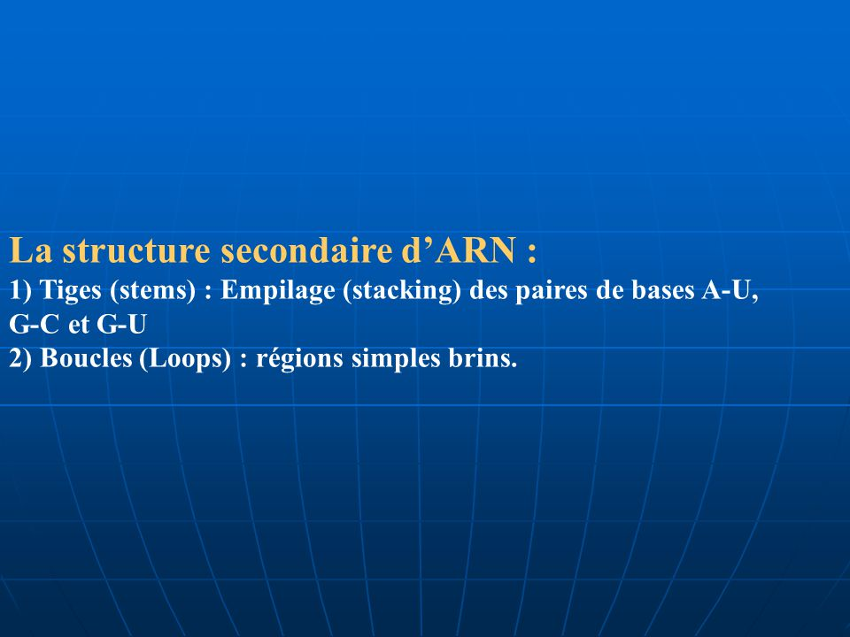 La structure secondaire dARN : 1) Tiges (stems) : Empilage (stacking) des paires de bases A-U, G-C et G-U 2) Boucles (Loops) : régions simples brins.
