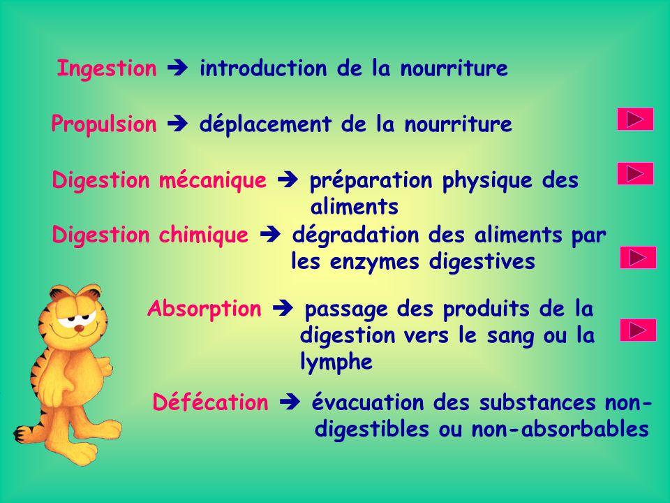 Voyons maintenant les six grandes fonctions du système digestif les six grandes fonctions du système digestif.