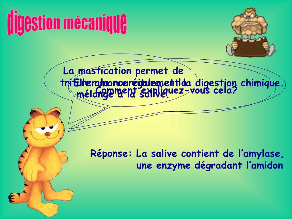 Il existe trois types de digestion mécanique: -Le pétrissage -La segmentation -La mastication