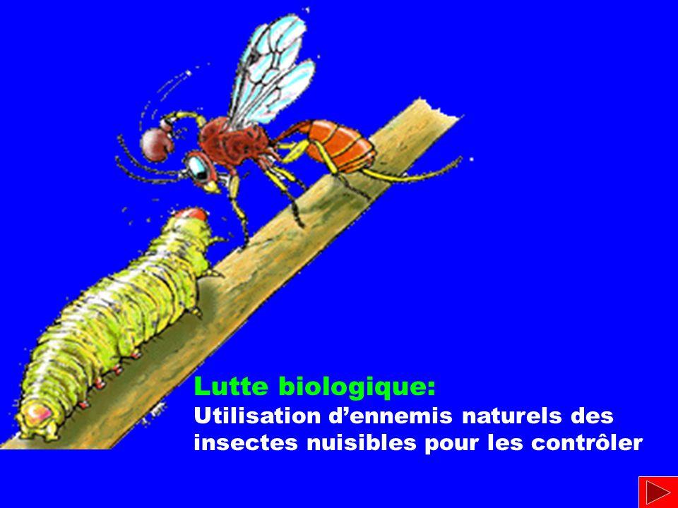 Lutte biologique: Utilisation dennemis naturels des insectes nuisibles pour les contrôler