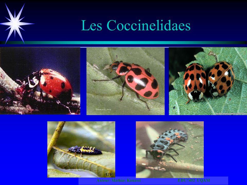 Auteur: Mathias Kouassi EDU7492 UQAM Les Coccinelidaes