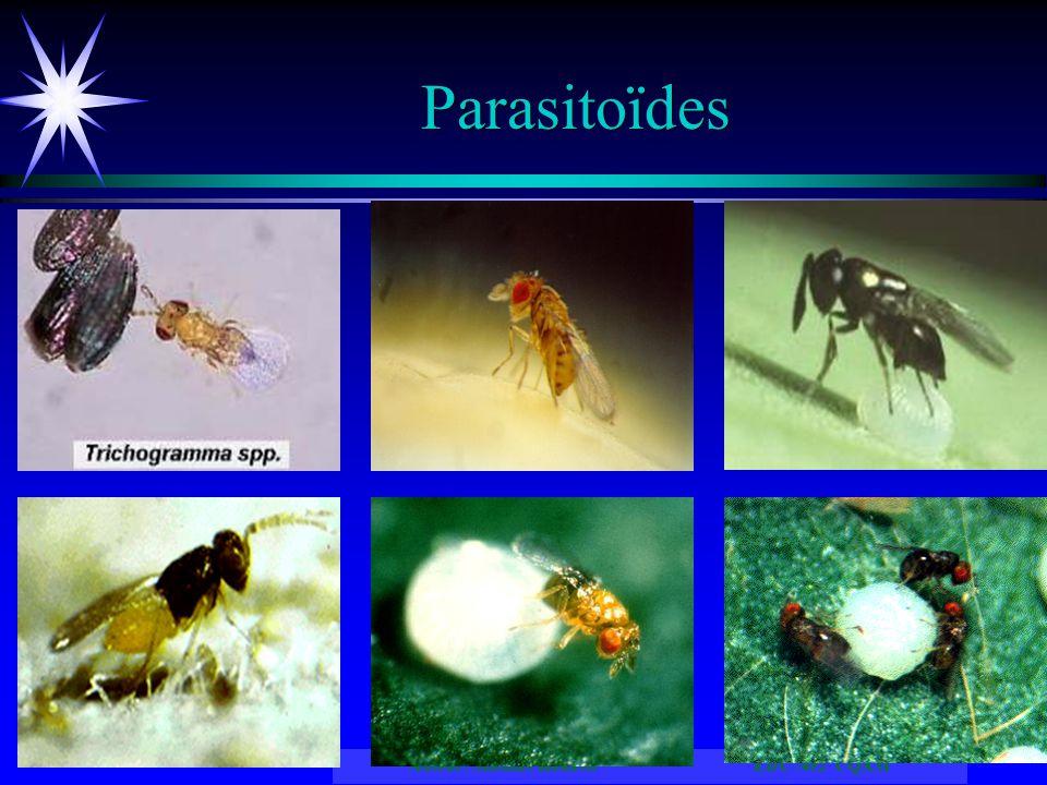 Auteur: Mathias Kouassi EDU7492 UQAM Parasitoïdes
