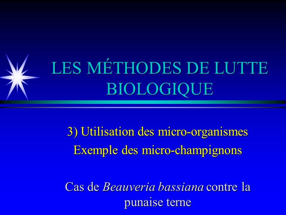 LES MÉTHODES DE LUTTE BIOLOGIQUE 3) Utilisation des micro-organismes Exemple des micro-champignons Cas de Beauveria bassiana contre la punaise terne