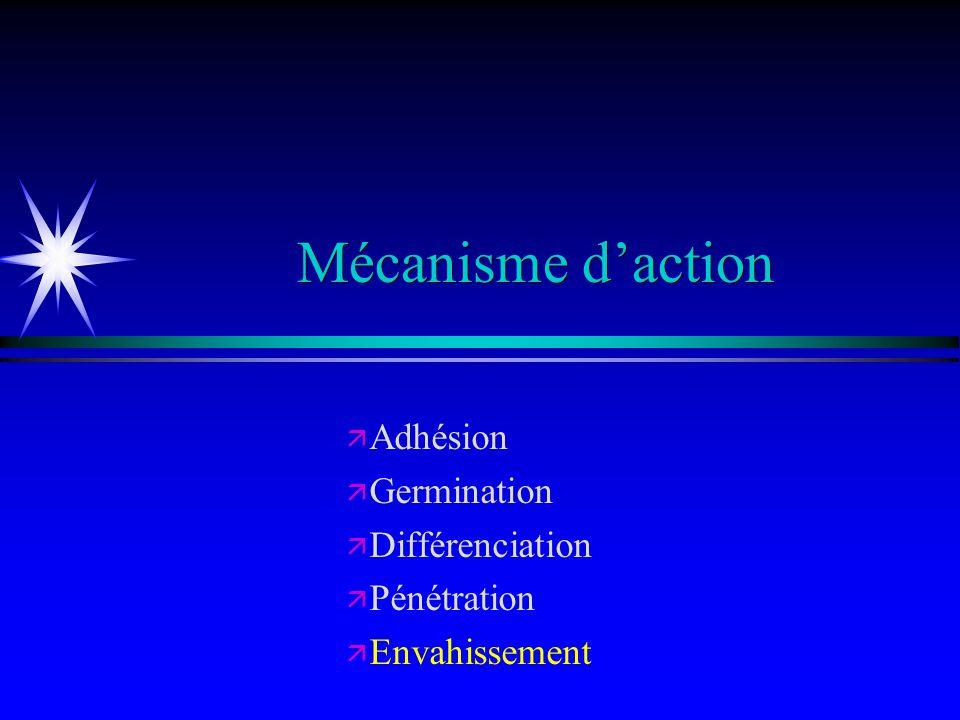 ä ä Adhésion ä ä Germination ä ä Différenciation ä ä Pénétration ä ä Envahissement