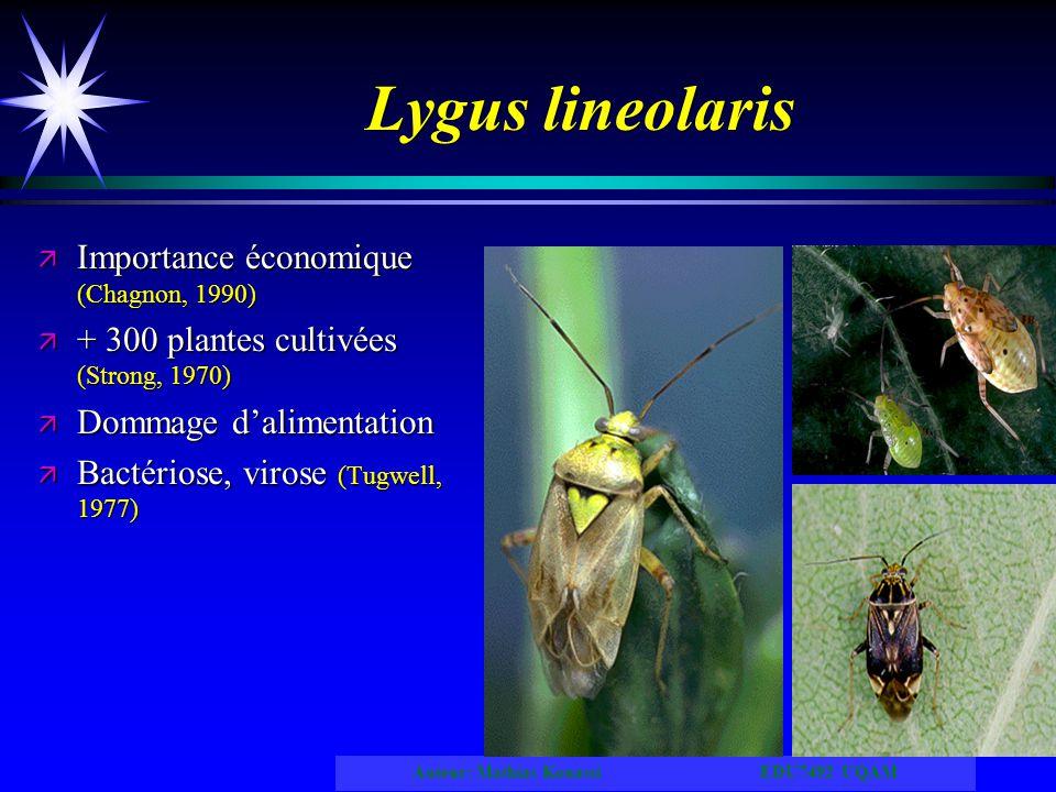 Auteur: Mathias Kouassi EDU7492 UQAM Lygus lineolaris ä Importance économique (Chagnon, 1990) ä + 300 plantes cultivées (Strong, 1970) ä Dommage dalim