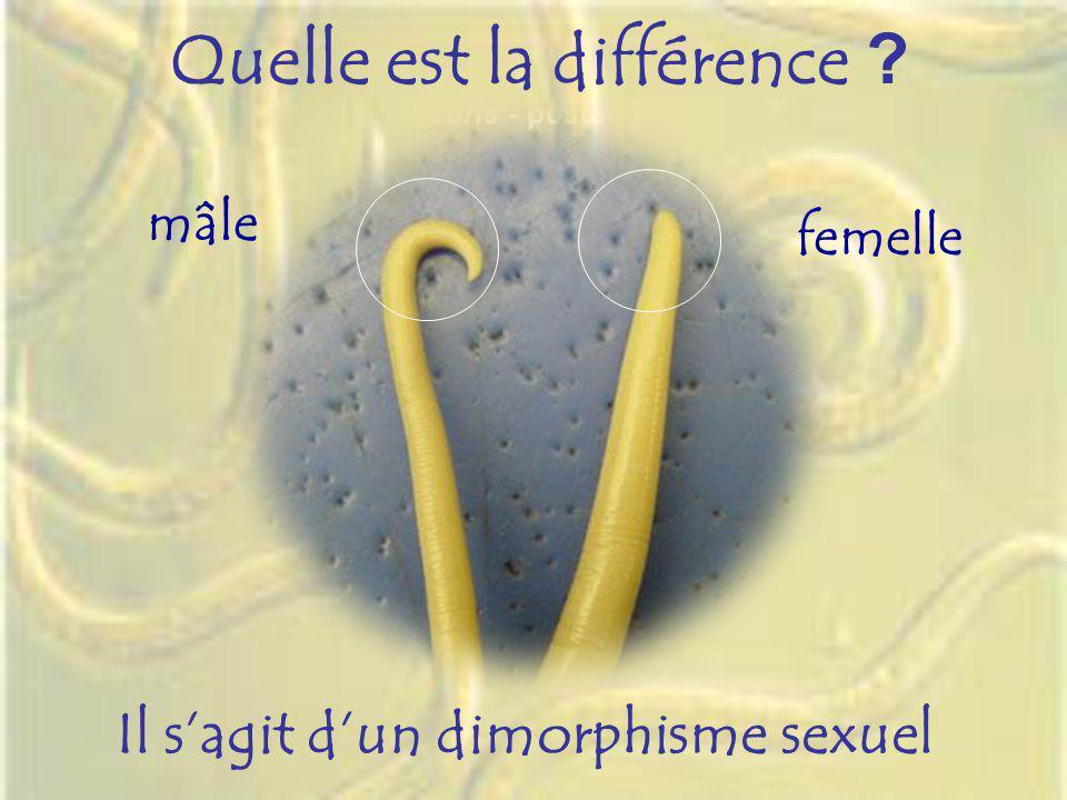 Quelle est la différence ? Il sagit dun dimorphisme sexuel femelle mâle