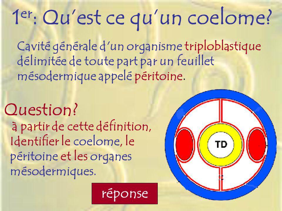 1 er : Quest ce quun coelome? Cavité générale d'un organisme triploblastique délimitée de toute part par un feuillet mésodermique appelé péritoine. à