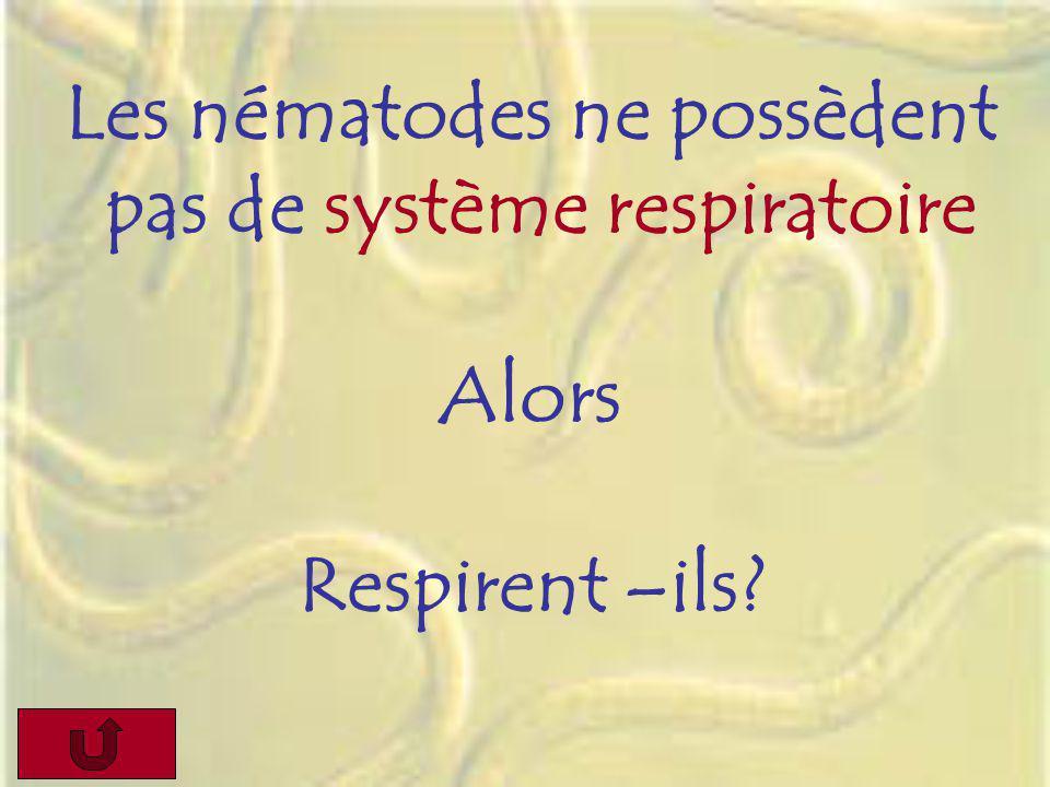 Les nématodes ne possèdent pas de système respiratoire Alors Respirent –ils?
