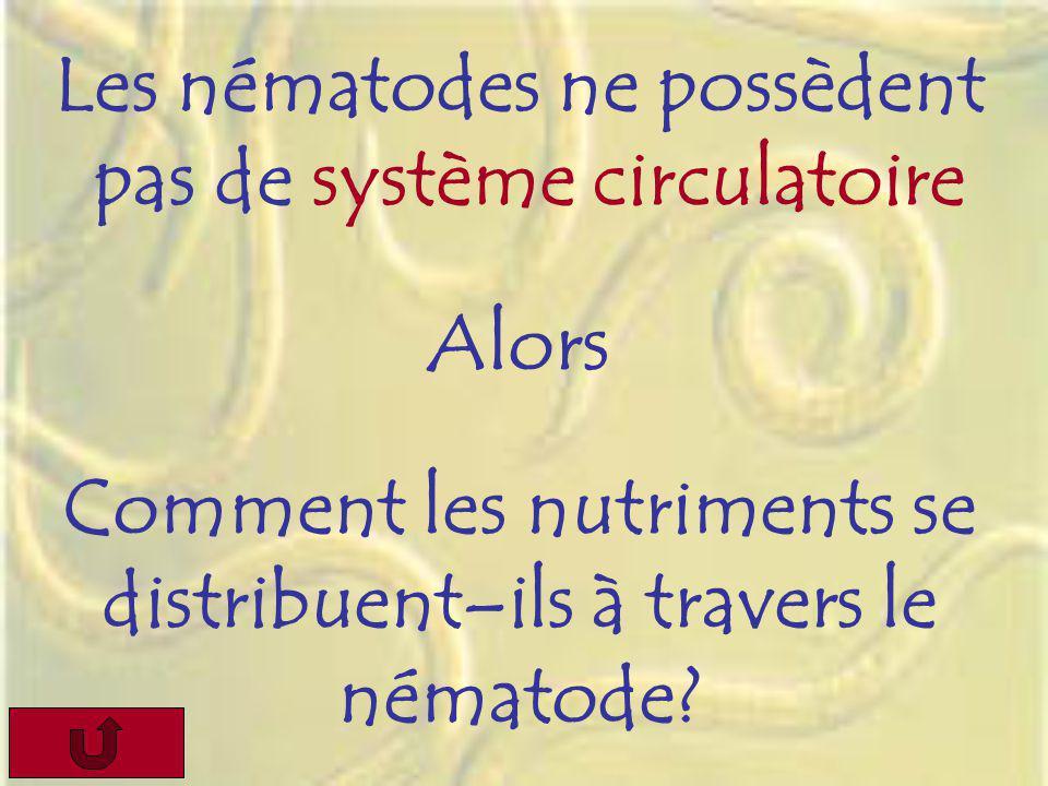 Les nématodes ne possèdent pas de système circulatoire Alors Comment les nutriments se distribuent–ils à travers le nématode?