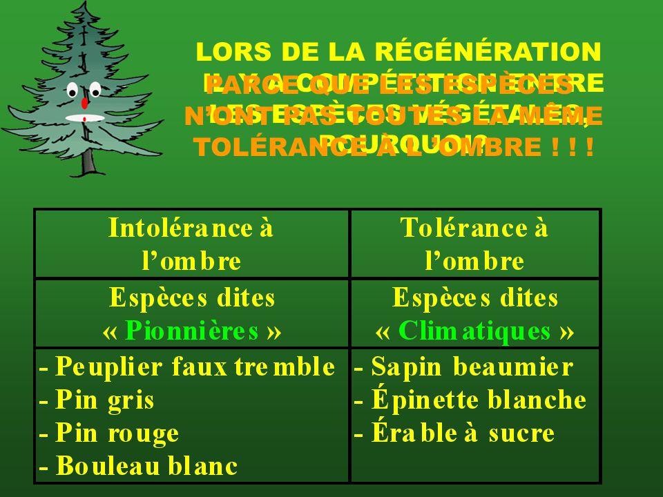 LORS DE LA RÉGÉNÉRATION IL Y A COMPÉTITION ENTRE LES ESPÈCES VÉGÉTALES, POURQUOI.