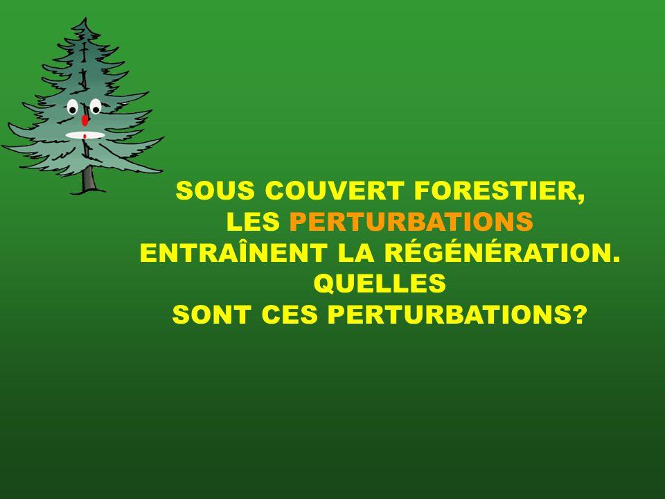 SOUS COUVERT FORESTIER, LES PERTURBATIONS ENTRAÎNENT LA RÉGÉNÉRATION.