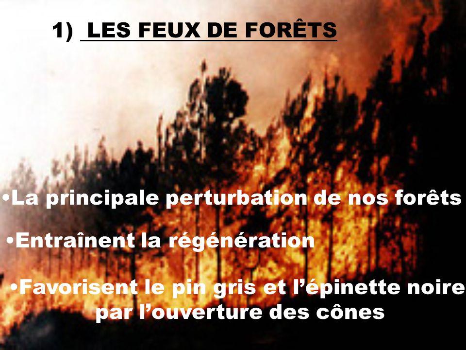 1) LES FEUX DE FORÊTS La principale perturbation de nos forêts Entraînent la régénération Favorisent le pin gris et lépinette noire par louverture des cônes