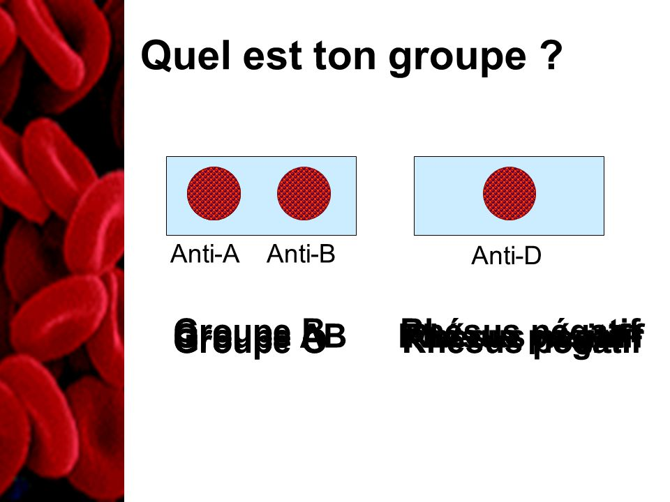 Anti-A Anti-B Quel est ton groupe ? Anti-D Groupe O Rhésus négatif Groupe O Rhésus positif Groupe A Rhésus positif Groupe AB Rhésus négatif Groupe B R