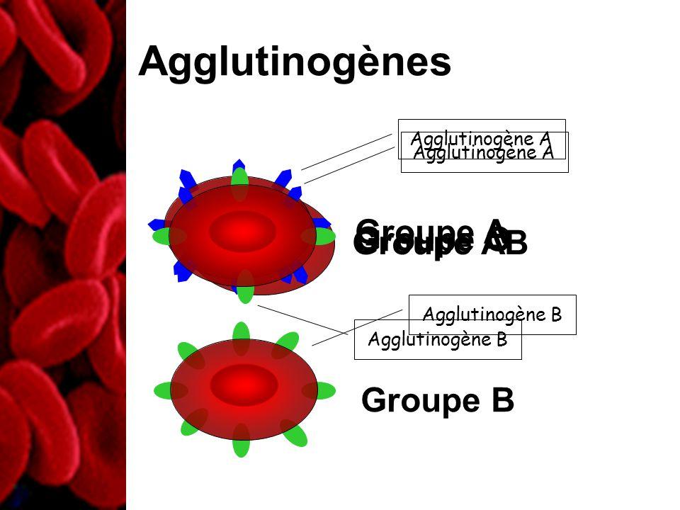 Groupe O Agglutinogènes Agglutinogène A Groupe A Agglutinogène B Groupe B Agglutinogène A Agglutinogène B Groupe AB