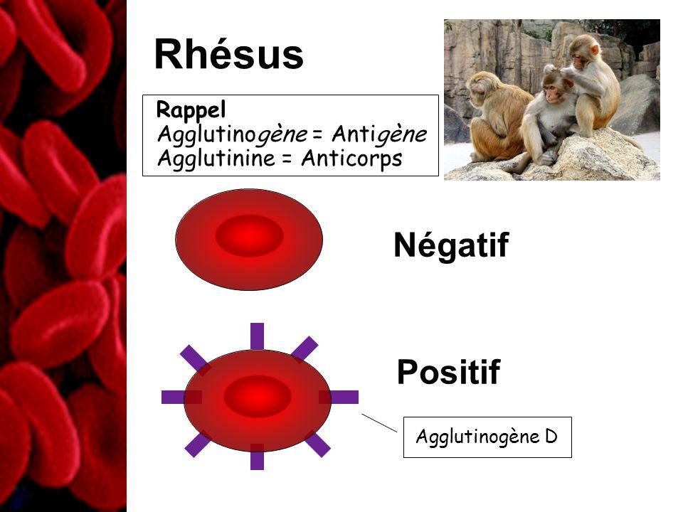 Rhésus Positif Agglutinogène D Négatif Rappel Agglutinogène = Antigène Agglutinine = Anticorps