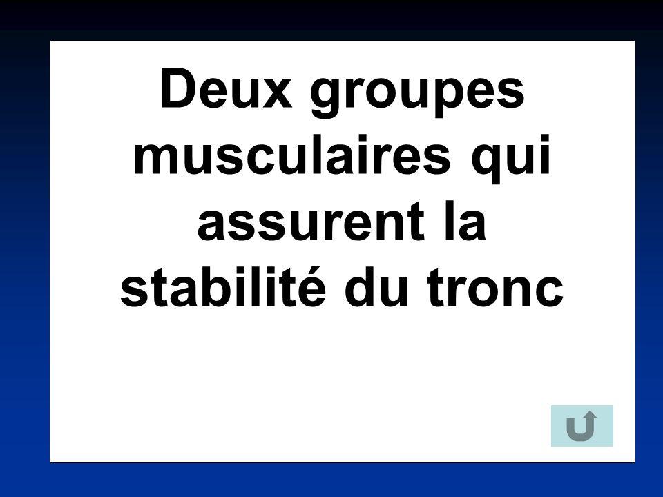Deux groupes musculaires qui assurent la stabilité du tronc