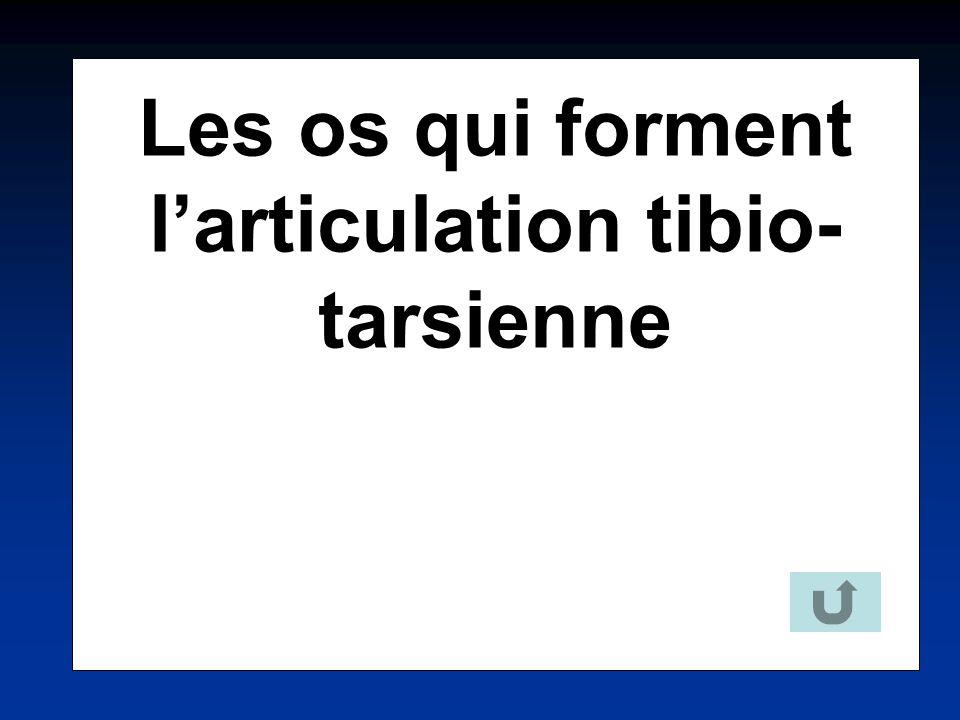 Les os qui forment larticulation tibio- tarsienne