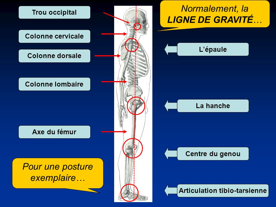 Normalement, la LIGNE DE GRAVITÉ… Colonne cervicale Colonne dorsale Colonne lombaire Axe du fémur Lépaule La hanche Centre du genou Articulation tibio-tarsienne Trou occipital Pour une posture exemplaire…