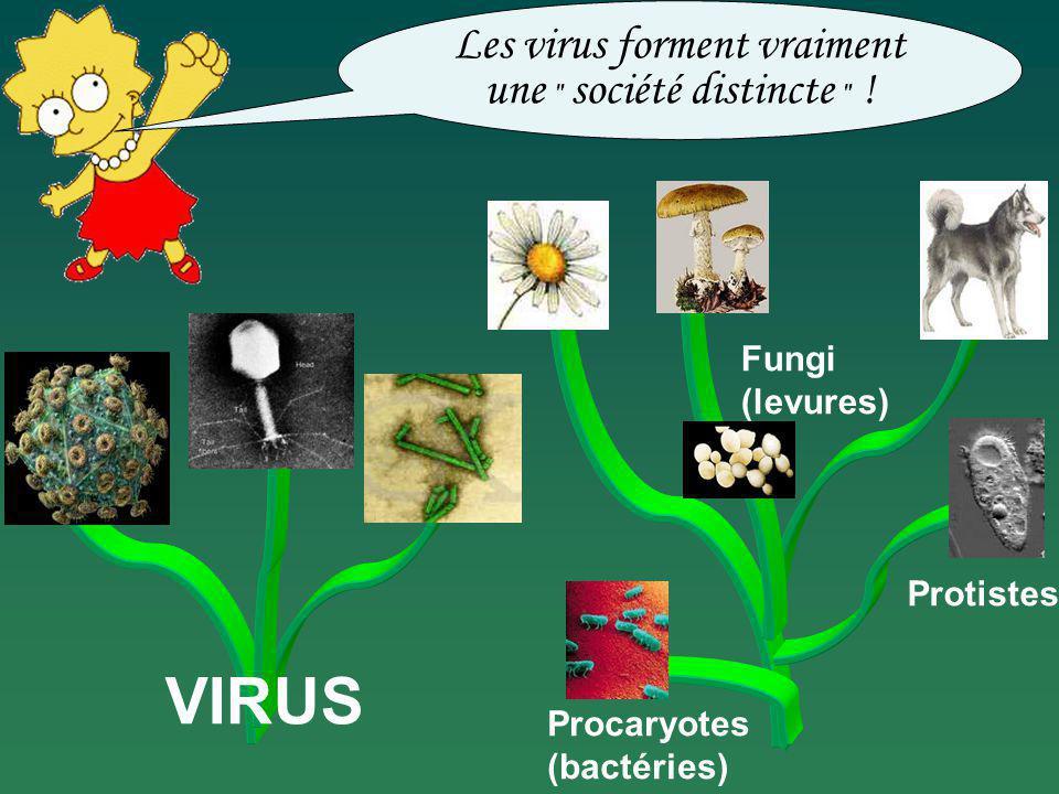 Procaryotes (bactéries) Fungi (levures) Protistes VIRUS Les virus forment vraiment une